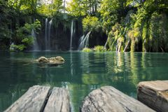 Waterfalls immersed in the green of a forest Royalty Free Stock Photography