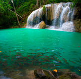 Waterfall and a blue pool with fish Royalty Free Stock Photos