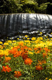 Waterfall at a Botanic Garden. Waterfall in a botanic garden with yellow and orange flowers in the foreground Stock Photography