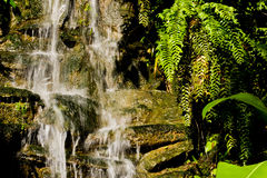 Waterfall in bright sun. Falling clean fresh water in bright Ecuador Sun with green plants stock images