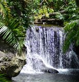 Waterfall. Waterfall at the Bronx Zoo royalty free stock images