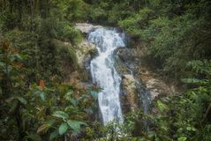 Waterfall in cameroun highlands. Jungle in malaysia Stock Images
