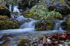 Waterfall in Carpathians mountains forest. Mountain waterfall and river in wild Carpathian mountains forest, Bucegi Natural Park Stock Photography