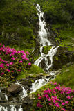 Waterfall in Carpathians Stock Images