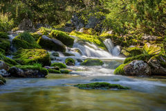 Waterfall cascades in mossy green forest Royalty Free Stock Images
