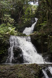 Waterfall cascading down through rain forest Royalty Free Stock Photos