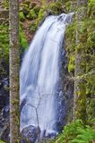 Waterfall cascading on rocks between two trees. Waterfall cascading on rocks in Oregon at Shellburg Falls. Viewed between two trees in forest Royalty Free Stock Image