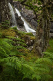 Waterfall in a Celtic Rainforest Royalty Free Stock Images