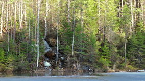 Waterfall in the coniferous forest. Video stock footage