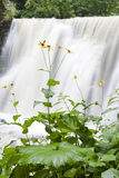 Waterfall in countryside. Picturesque waterfall in countryside with wild flowers in foreground Royalty Free Stock Photos