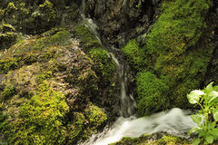Waterfall and creek Stock Images