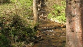 Waterfall Creek in Nature stock video