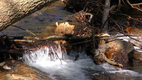 Waterfall Creek in Nature stock footage