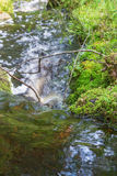 Waterfall in a creek Royalty Free Stock Photography