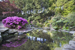 Waterfall at Crystal Springs Rhododendron Garden in Spring. Waterfall and Pond at Crystal Springs Rhododendron Garden in Spring Stock Photos