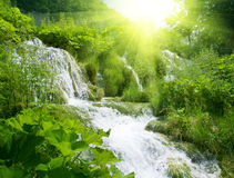 Waterfall in deep forest royalty free stock image