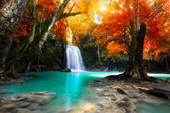 Waterfall. Deep forest Waterfall with autumn leaf tree