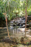 Waterfall in the deep forest of Palenque stock photos