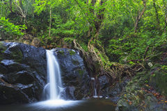Waterfall in deep forest Royalty Free Stock Images