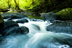 Waterfall with deep green forest background Royalty Free Stock Image