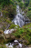 Waterfall in deep rain forest jungle Stock Images