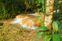 Waterfall in deep rain forest Stock Photography