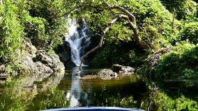Waterfall in deep tropical rain forest. stock video