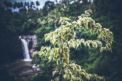 Waterfall deep in the tropical rain forest of Ubud, tropical Bali island, Indonesia. Exotic scene of tropics. Royalty Free Stock Photography