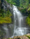 Waterfall through dense forest Royalty Free Stock Image
