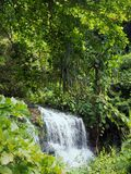 Waterfall in the depths of the cloud forests Royalty Free Stock Images