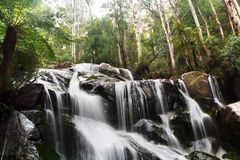 Waterfall Detail. Toorongo Falls, Victoria, Australia, with mountain ash trees and treeferns royalty free stock photos