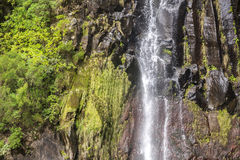 Waterfall Detail with Rock and Plants. Trees royalty free stock image