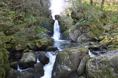 Waterfall, devils glen, wicklow ireland Royalty Free Stock Photos