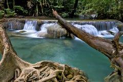 Waterfall and dry tree Stock Photo