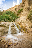 Waterfall in En Gedi Nature Reserve and National Park Stock Photography