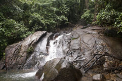 Waterfall in exotic forest vegetation wet after the rain Royalty Free Stock Images
