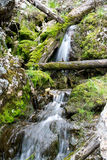 Waterfall for Fairies. Small streams in very green foliage makes for a beautiful small waterfalls. The ways the logs fell across the stream and the moss covered Royalty Free Stock Photos