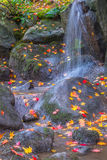 Waterfall Fallen Autumn Leaves. Waterfall with fallen autumn maples leaves in rocky stream. Vertical stock photos