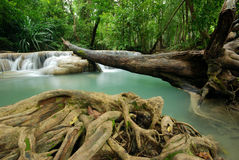 Waterfall with fallen tree Stock Image