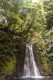 Waterfall falling from the cliff dotted with thick shoots stock photos