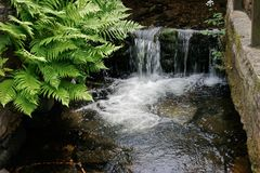 Waterfall and ferns Royalty Free Stock Photo