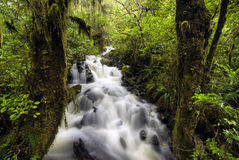 Waterfall in Fiordland National Park, South Island, New Zealand Stock Photo