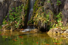 Waterfall and fish Stock Image