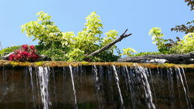 Waterfall Floral Blue Sky 4k. Tropical vegetation and waterfall on the background of blue sky stock footage