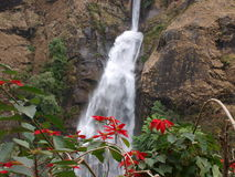 Waterfall and flowers Stock Images