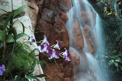 Waterfall with flowers landscape. Waterfall with flowers in foreground Royalty Free Stock Image
