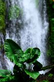 Waterfall and flowers royalty free stock images