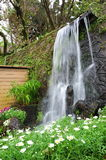 Waterfall with flowers in Yang Ming Mountain Royalty Free Stock Images