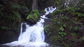 Waterfall Flowing Through California Forest. A stream tumbles noisily over rocks as it flows through a beautiful forest in northern California stock video