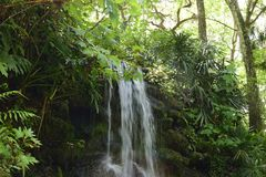 Waterfall flowing down Moss covered rock in the Springtime at a Florida State Park. Stock Images